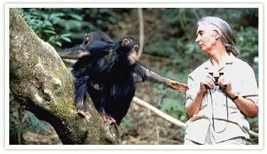 a description the relationship between wildlife and human in the community of gombe africa Through a window: my thirty years with the chimpanzees of gombe                wwwgoodreadscom/book/show/135490through_a_window.